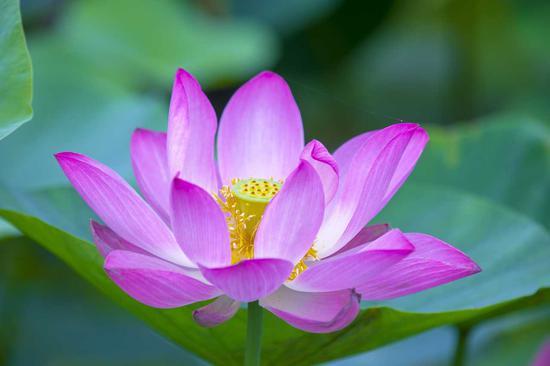 中峰明本禅师:五种正信