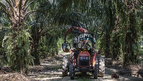 从联合国吵到达沃斯:印度制裁棕榈油大马伤不起