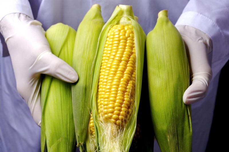 国产品种时隔十年再获农业转基因生物安全证书